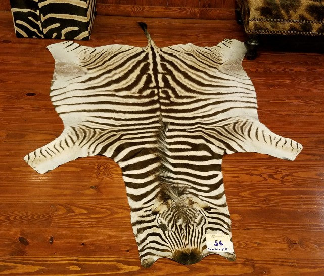 S-Grade ZEBRA SKIN RUG - S6 - Trophy Room Collection