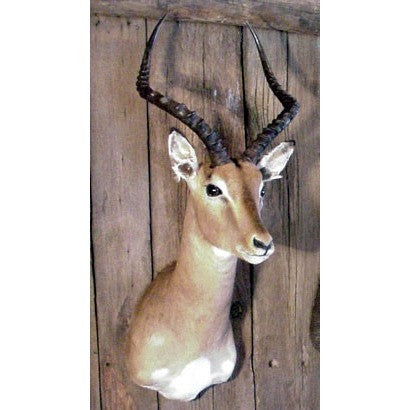 Shoulder Mounts, Trophy Mounts, African Decor, Impala.