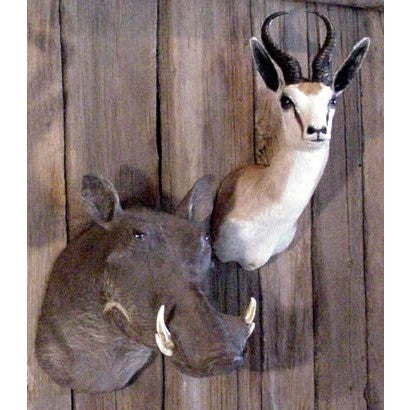 Shoulder Mounts, Trophy Mounts, African Decor, Trophy Room Collection, Springbok.