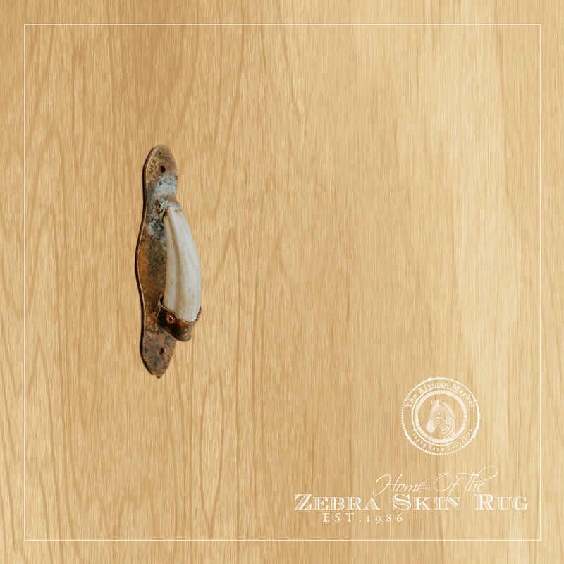 WARTHOG TUSK - Kitchen Door Pull Handle - Trophy Room Collection