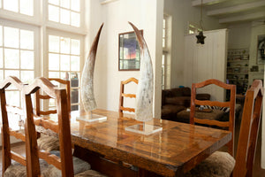 Watusi Horn On Acrylic Base - Upright (pair) - Trophy Room Collection