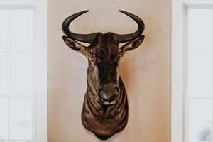 SHOULDER MOUNT - Wildebeest Trophy - Trophy Room Collection