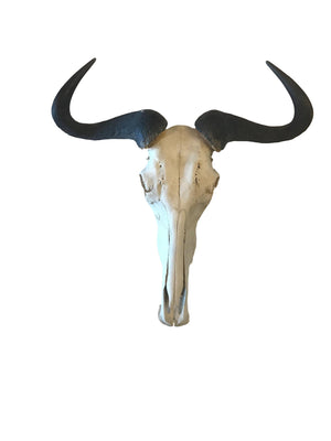 Natural Wildebeest Horn Mount - Trophy Room Collection