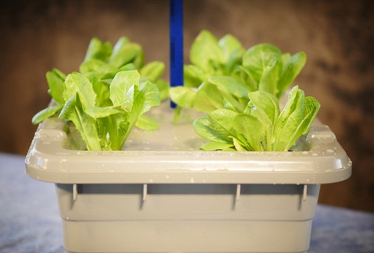 Food Rising Mini-Farm Grow Box 2.0 (Lettuce Starter Kit with 9-hole Lid) (Ship within 2-6 business days)