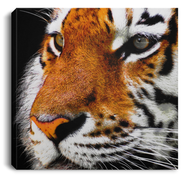 Tiger Face Square Canvas Wall Art