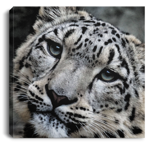 Snow Leopard Face Square Canvas Wall Art
