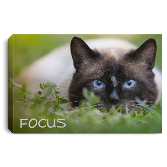 Colorpoint Cat - FOCUS Canvas Wall Art