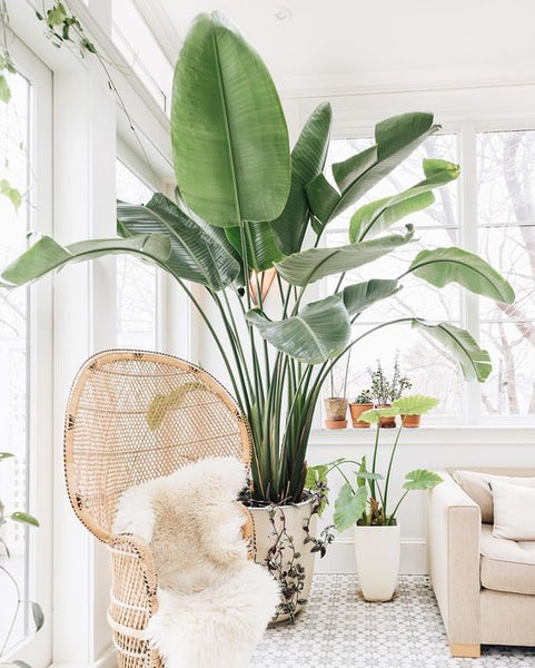 How To Choose The Right Planter Pots For Your Home