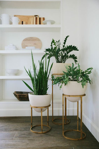Fake It A Style Guide For Incorporating Artificial Plants And