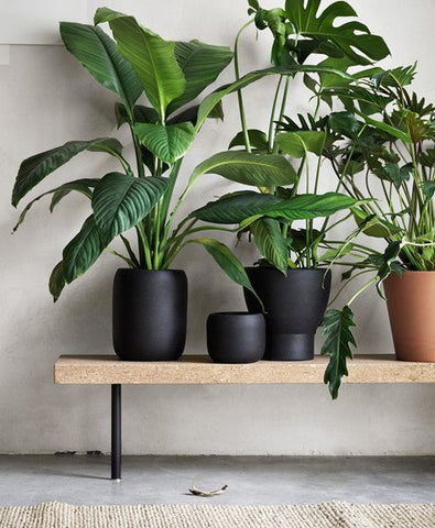 styled houseplants