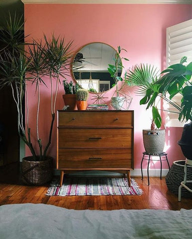 styled room with houseplants