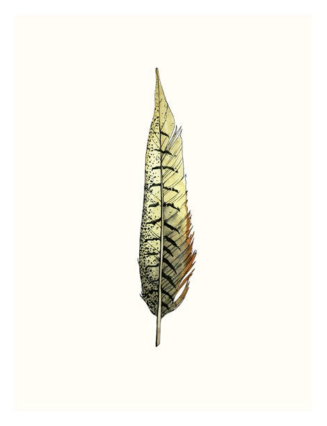 Painted Feather A Framed Print