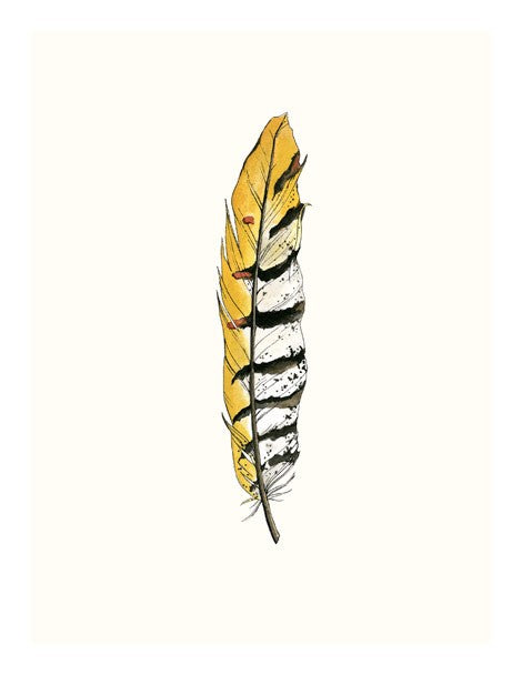 Painted Feather B Framed Print