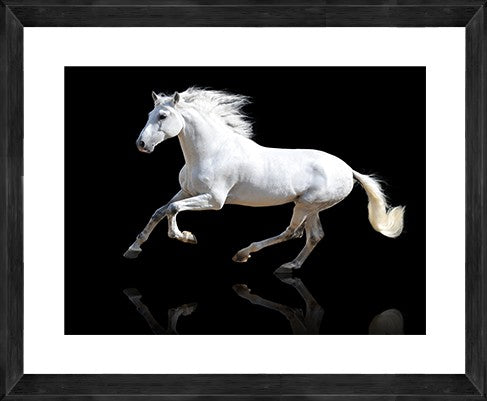 Black Gallop Photographic Print with Frame