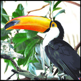Toucan Paradise Canvas with Frame