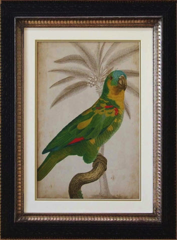 Tropical Parrot and Palm Print II