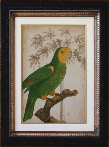 Tropical Parrot and Palm Print IV