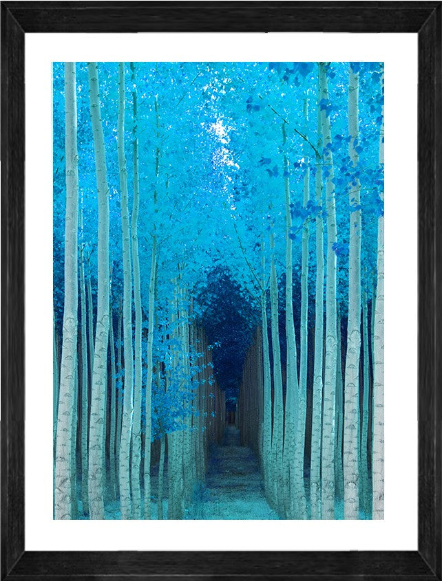 Blue Path Photographic Print with Frame