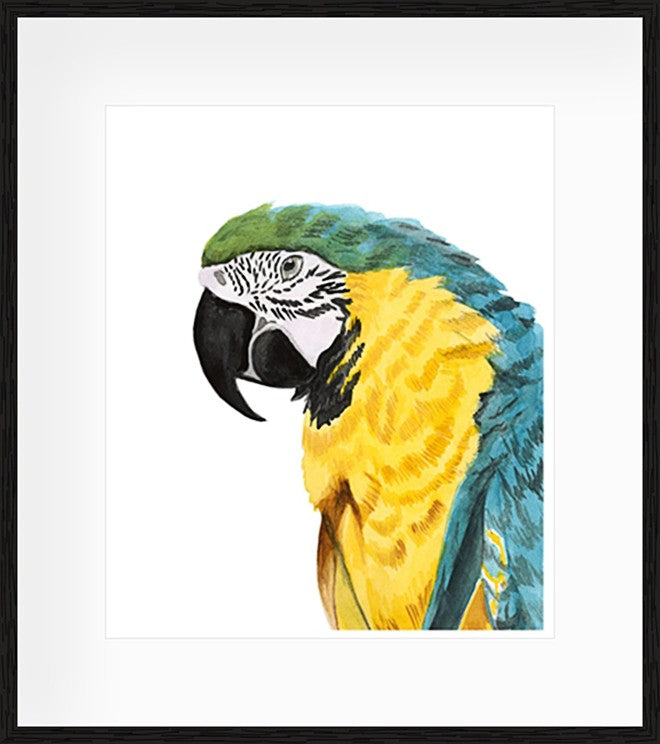 Watercolour Parrot Framed Print