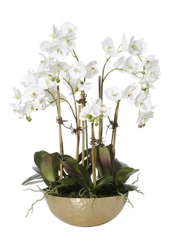 Phalaenopsis Garden in Element Bowl