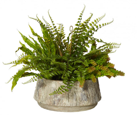 Fern Succulent Mix - Forest Pot