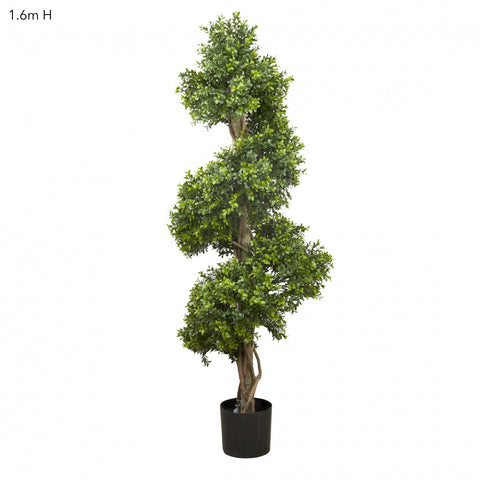 Boxwood Spiral Tree 1.5m