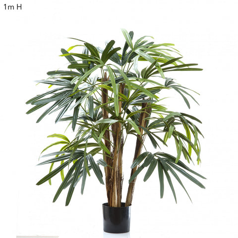 Raphis Palm Tree 1m