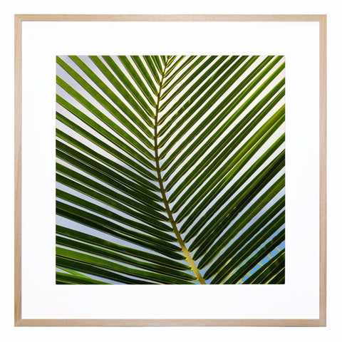 Cocos Giclee Print with Frame