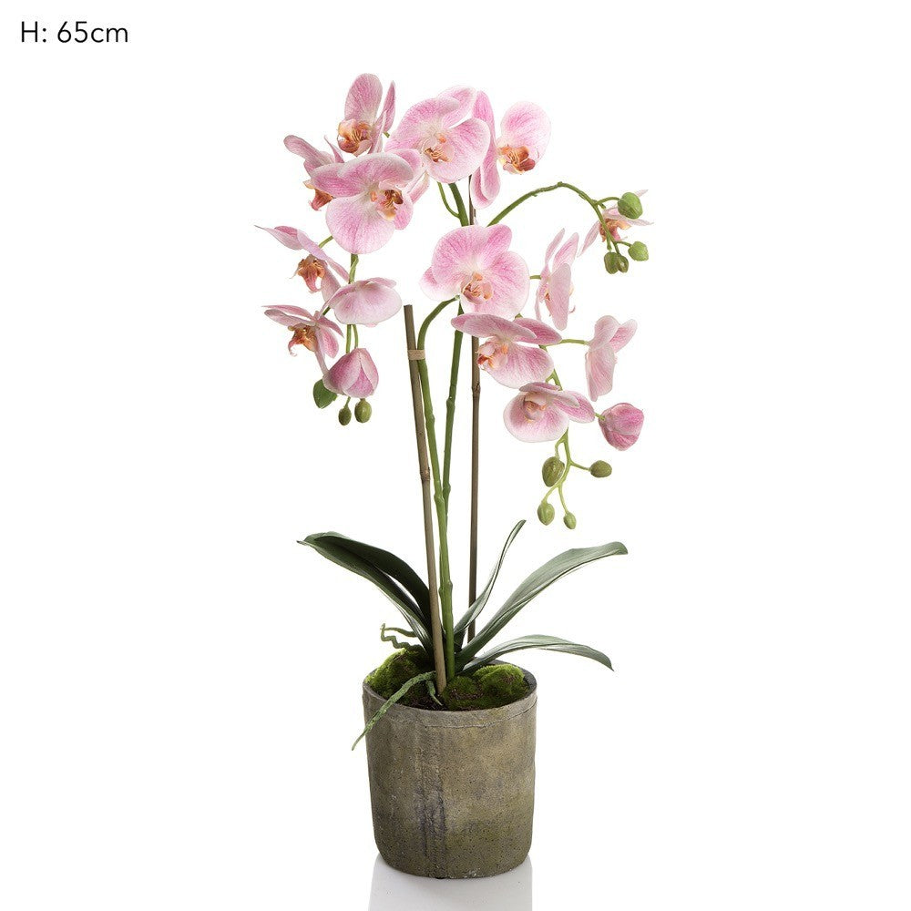 Orchid in Terracotta Pot Pink