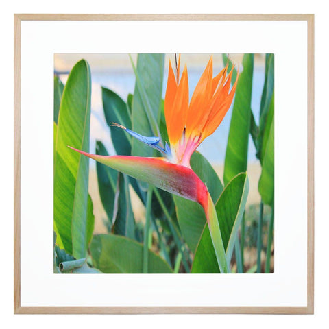 Paradiso Giclee Print with Frame