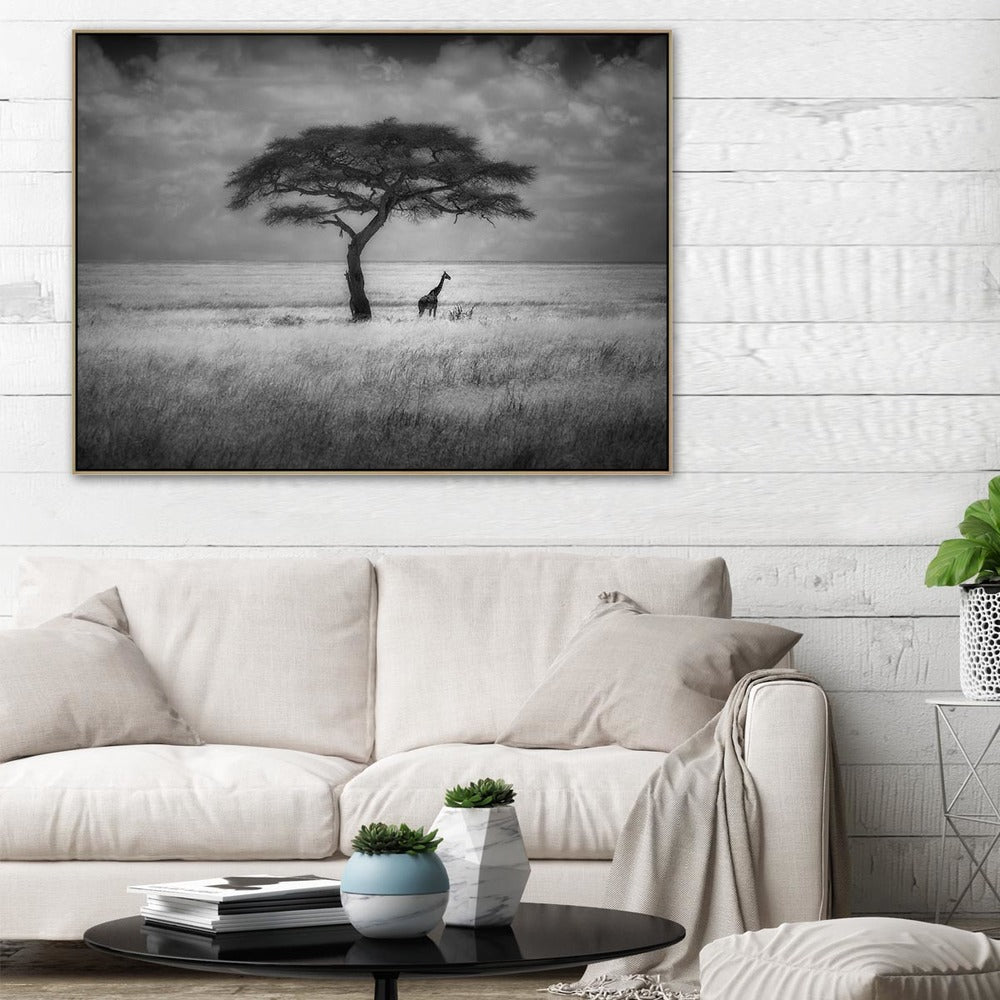 Shady Tree Photographic Canvas Print with Floating Frame