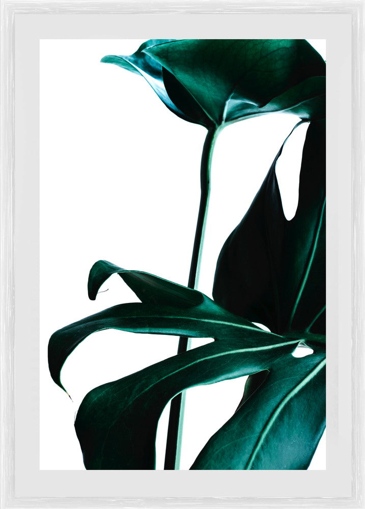 Green Palm 3 Photographic Print with Frame
