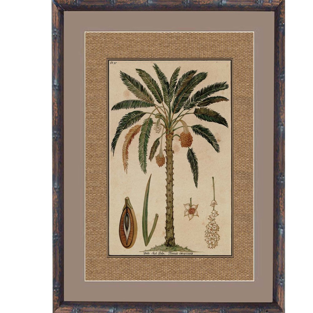 Tropical Palm Print III