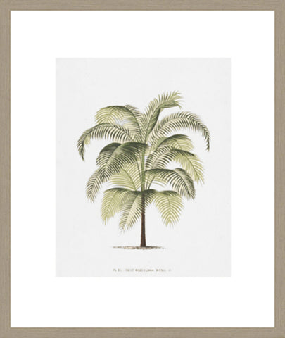 Les Palmiers On White I Framed Print