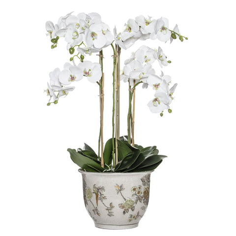 Phalaenopsis in Lucia Round Pot 88cmH