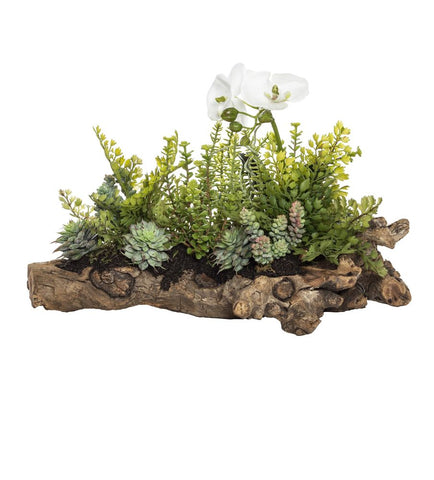 Phalaenopsis Fern Mix in Aged Hollow Trunk 74cmL