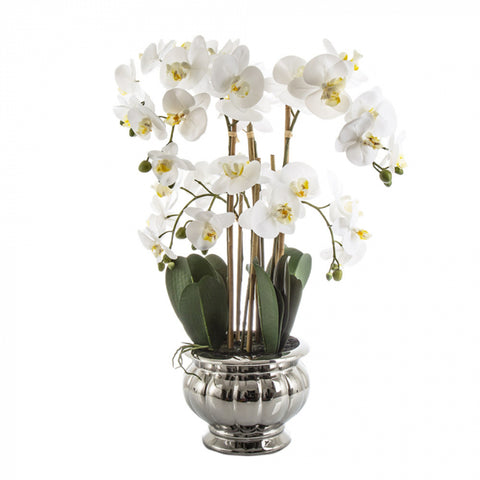 Potted Orchid in Silver Bowl