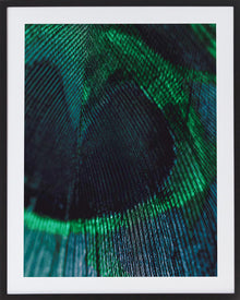 Emerald Feather 1 Framed Photographic Print