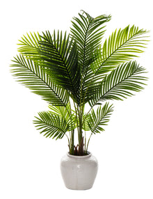 Areca Palm in Hunter Planter