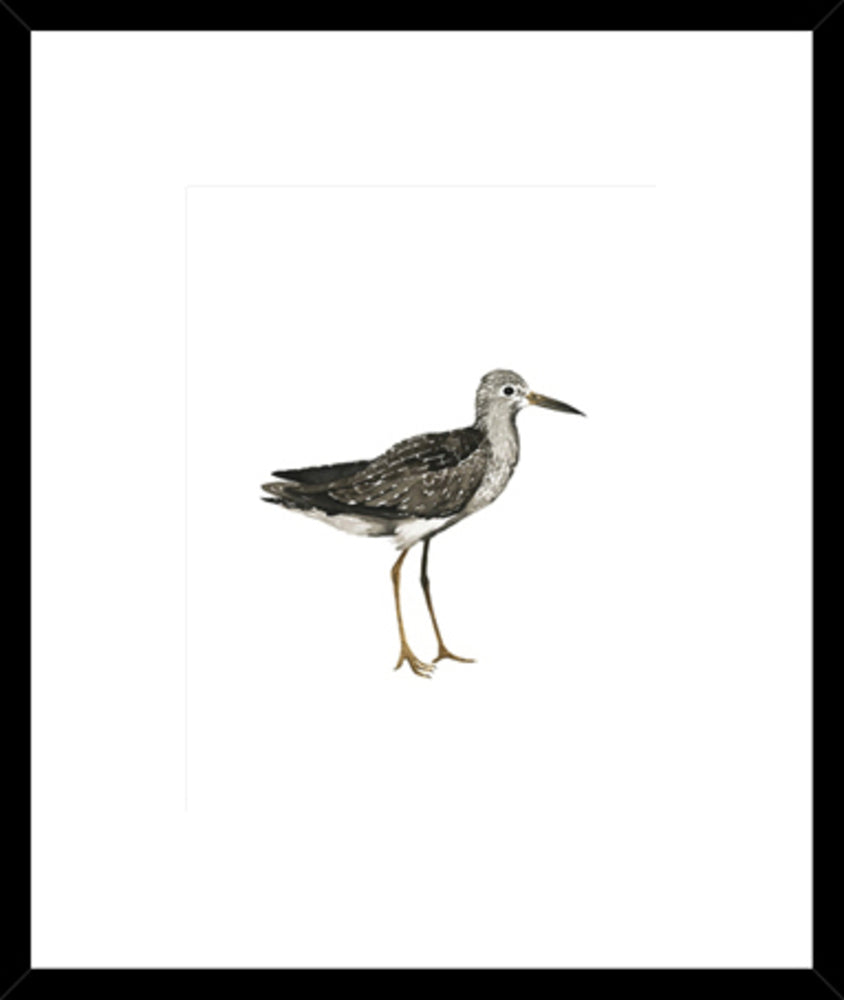 Sea Bird III Framed Print