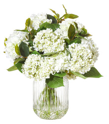 Hydrangea in Valentina Vase White Large