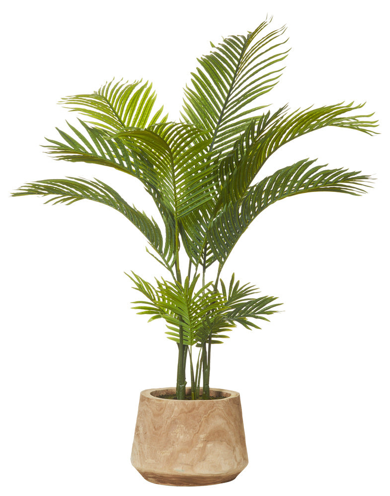 Palm In Pot.Areca Palm Dansk Tub Pot