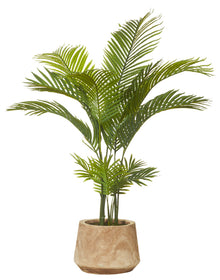 Areca Palm Dansk Tub Pot