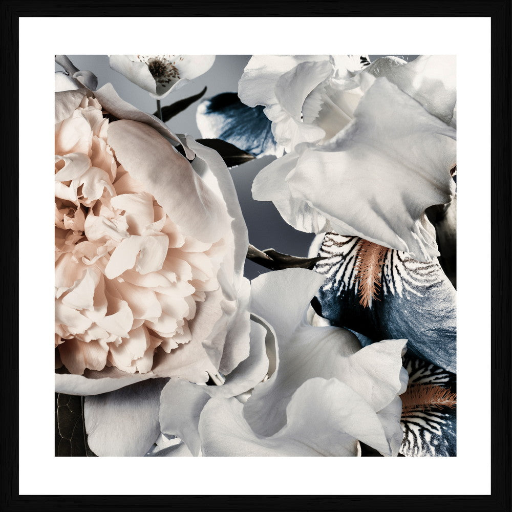 Peony And Iris Photographic Framed Print