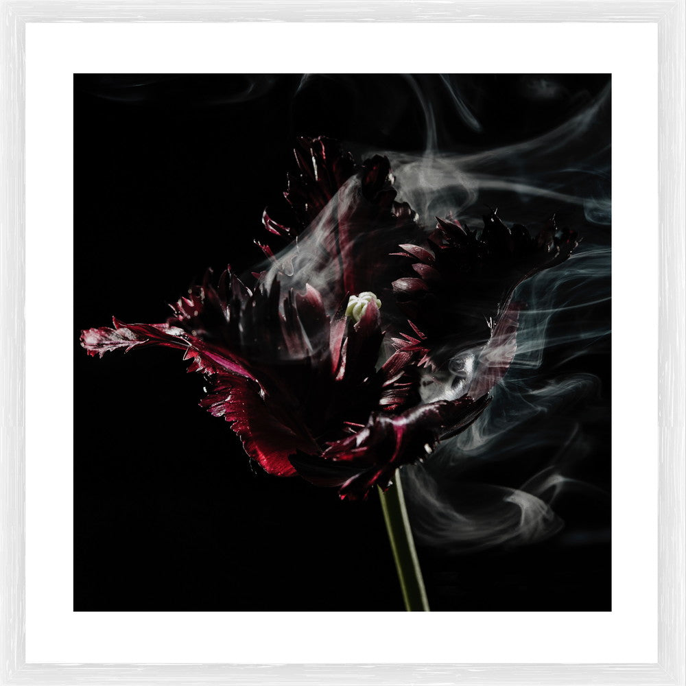 Smokey Photographic Framed Print