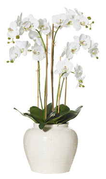 Deluxe Phalaenopsis in Hunter Vase White