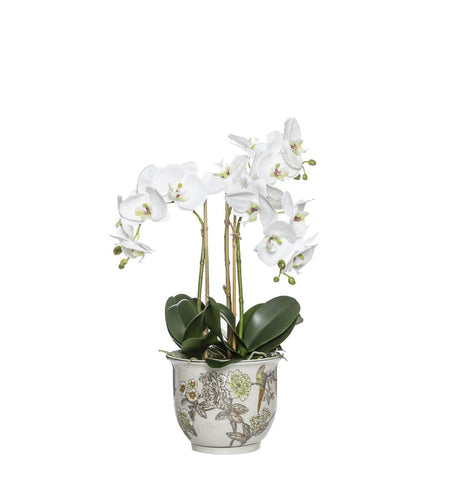 Phalaenopsis in Lucia Round Pot 58cm