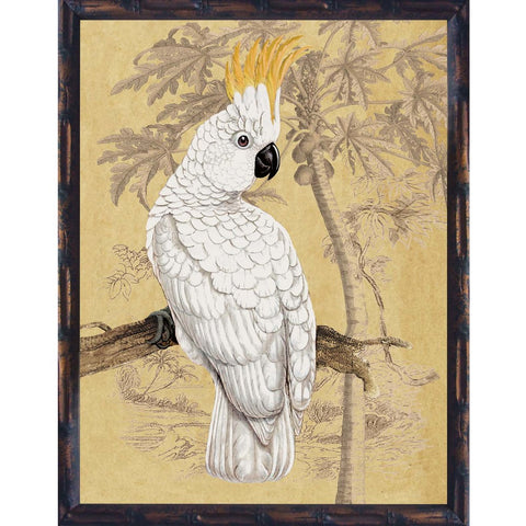 Sulphur Crested Cockatoo II Framed Print