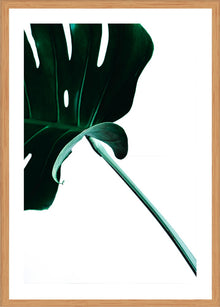 Green Palm 4 Photographic Print with Frame