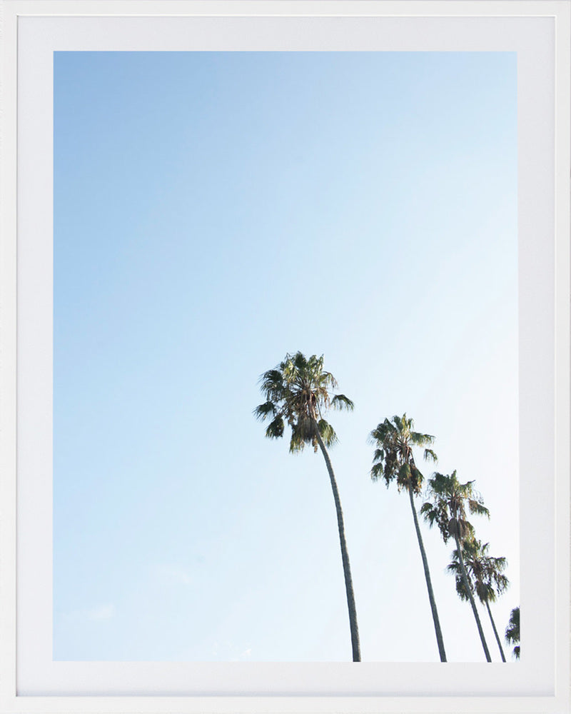 Palm 1 Framed Photographic Print